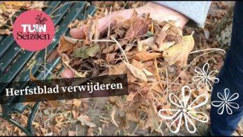 Herfstblad verwijderen - Tuinvlog