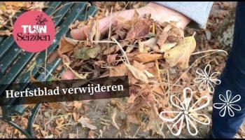 Herfstblad verwijderen