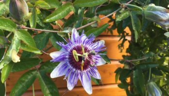 Wat de aanhoudende droogte met de tuin doet