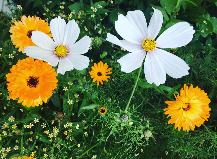 bloemen droogte