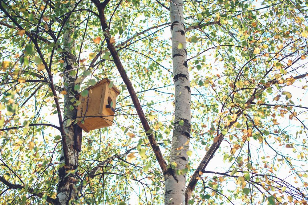 Diervriendelijke tuin | vogels lokken