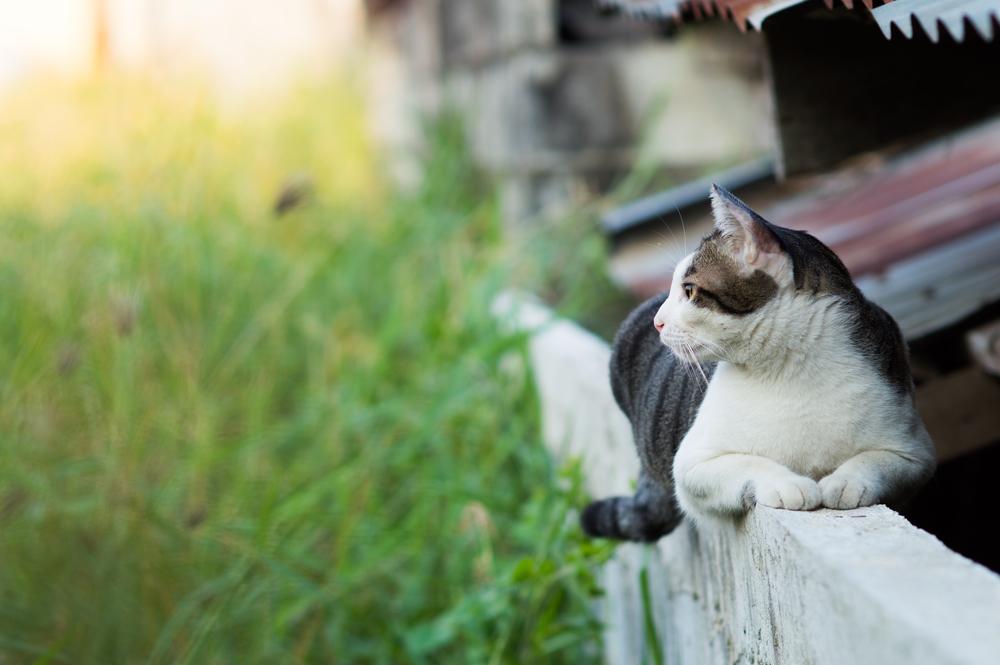 Diervriendelijke tuin | giftige planten voor kat