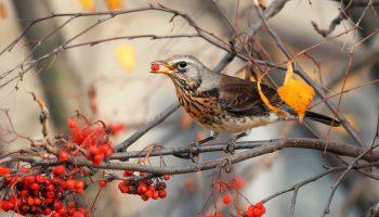 Vogels lokken in de herfst