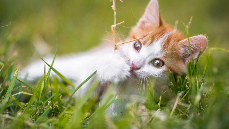 Giftige planten voor huisdieren