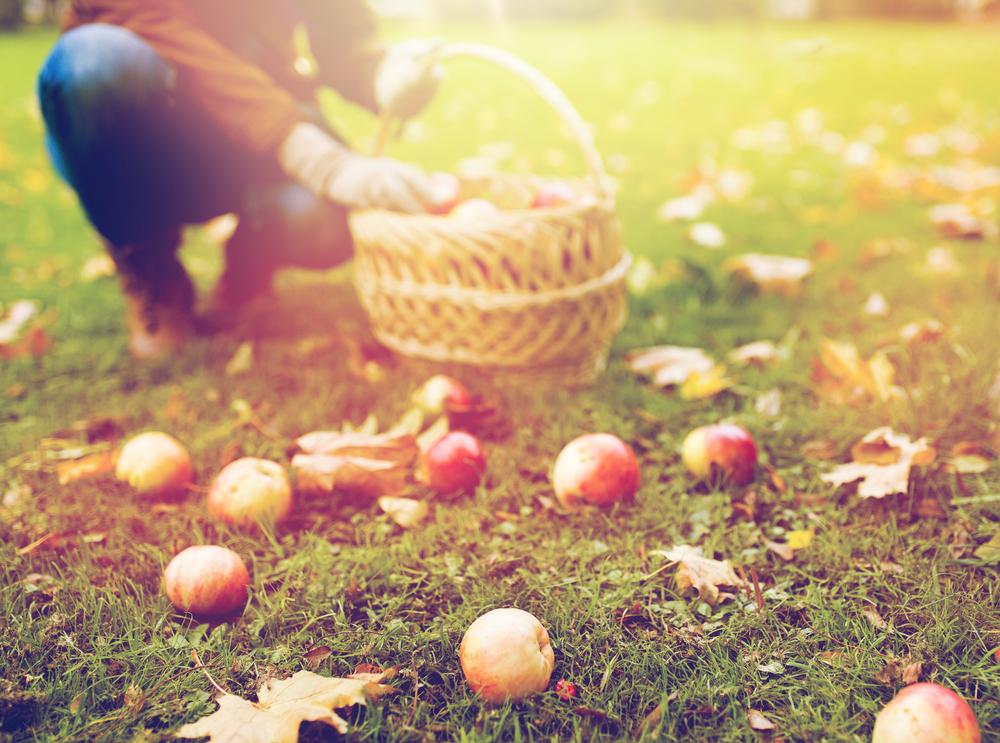 fotowedstrijd herfst