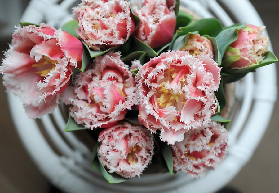 Bloembollentrends 2019: tulpen