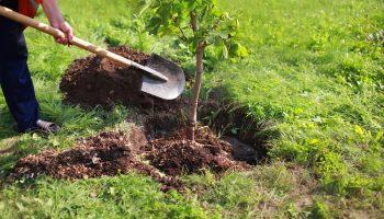 Boom, planten, zo doe je dat, tuinieren