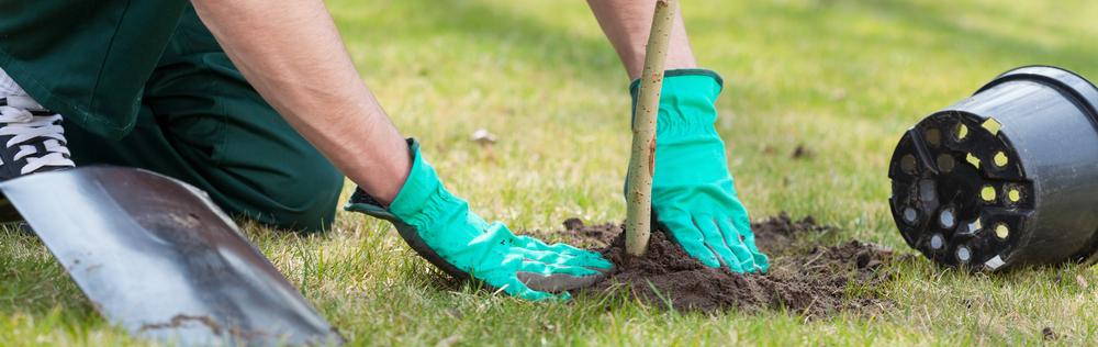 Boom, planten, tuinieren, doe het zelf,