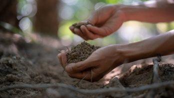 Goede aarde – alles over grond in de tuin