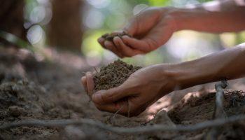 Handje aarde, grond, zandgrond,