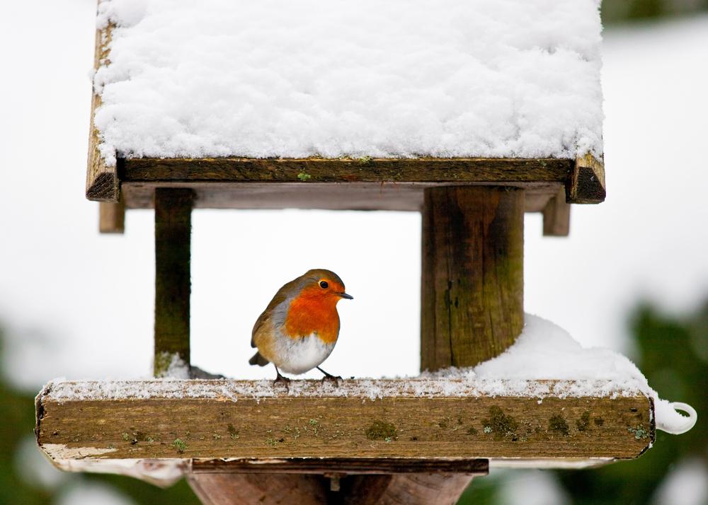 Vogel, sneeuw, tuin, vogelhuisje, vorst