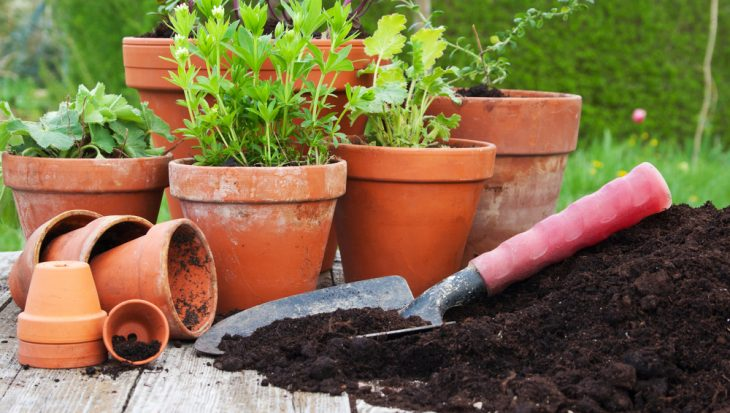 Gravel garden in pot – Zo doe je dat!