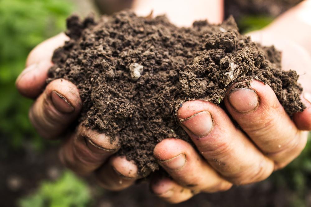 compost, moestuin, gezonde grond, angelo dorny, tuinseizoen