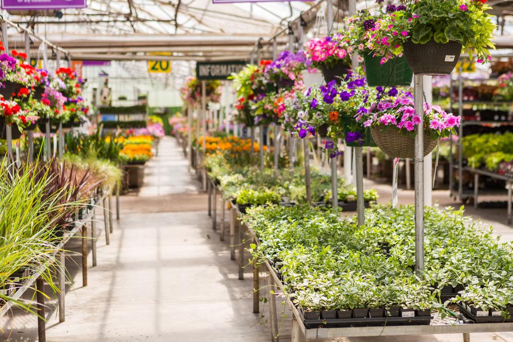 tuincentrum, column, laurence machiels, zaden, bloemen, tuinseizoen