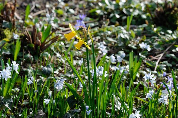 Voorjaarsprikkels