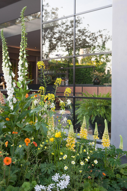 Eigentijdse eco daktuin, daktuin, ecologisch, tuinontwerp, sfeervol, eigentijds, tuinseizoen