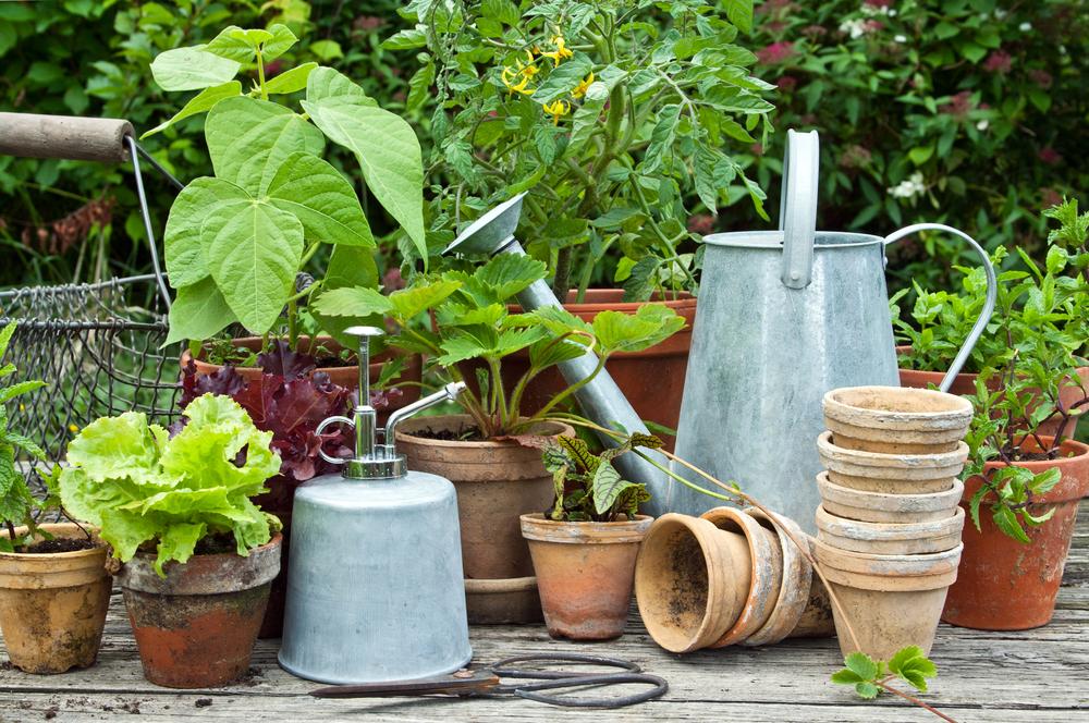 moestuintje, pot, moestuin, groenten, zelf kweken, tuinseizoen