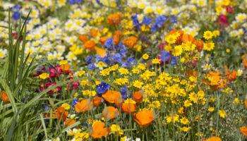 Plantenbeurs, column, laurence machiels, chelsea flower show