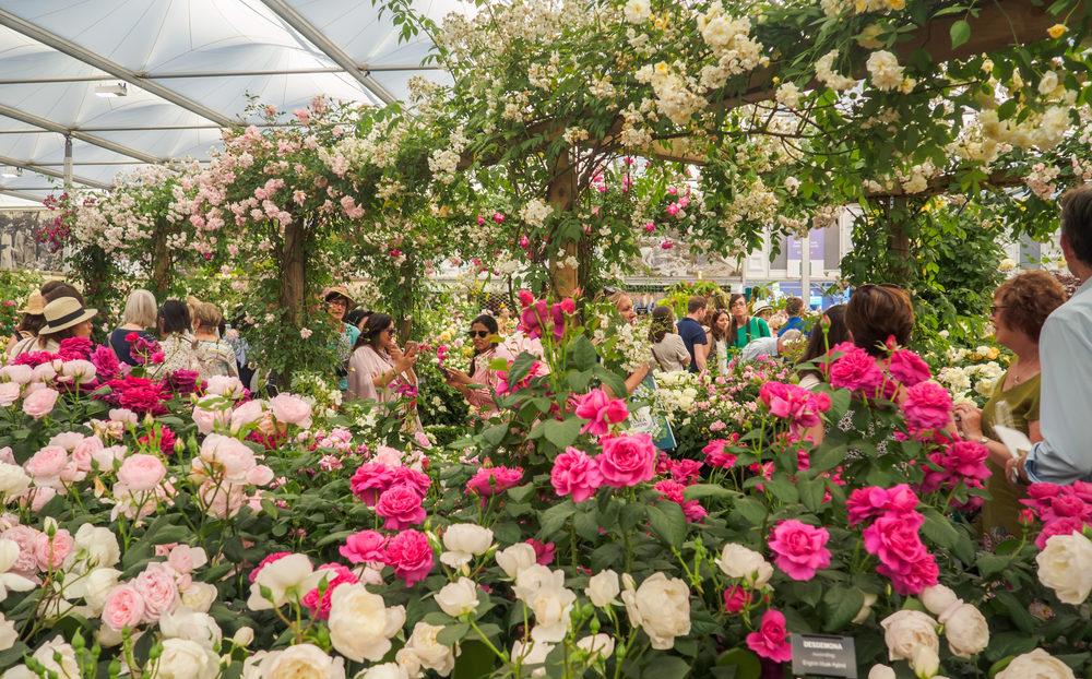 plantenbeurs, column, laurence machiels, queen, chelsea flower show, tuinseizoen