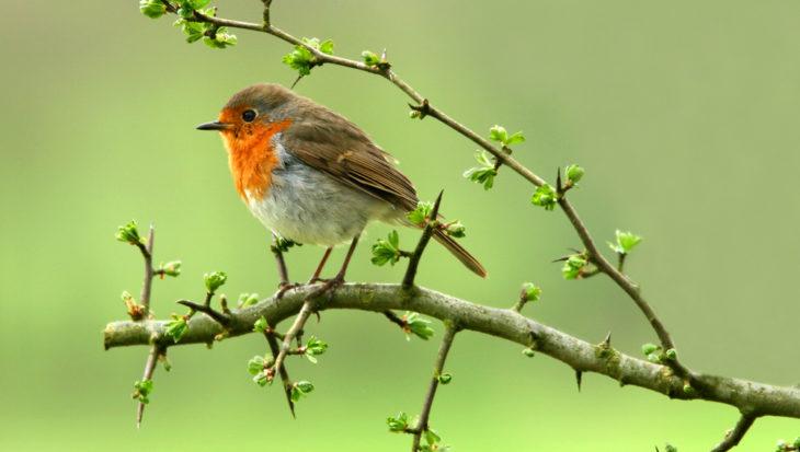 5 tips voor je meer (soorten) vogels in je tuin