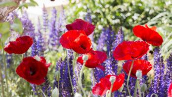 showtuin, chelsea flower show, Tom Massey
