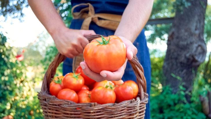 Tomaten verzorgen – De moestuin van Angelo