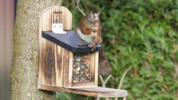Puzzel november-december: win een eekhoornvoederhuis
