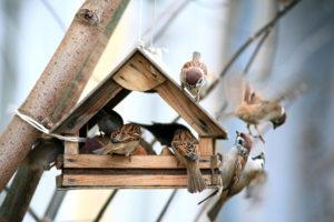 Vogelvoer, winter,voederhuisje