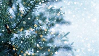 Houd je kerstboom langer mooi: 12 weetjes & tips