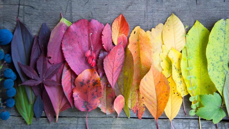 Vlammende herfstkleuren vormen een feest!