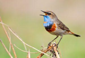 vogels spotten- Column Laurence Machiels