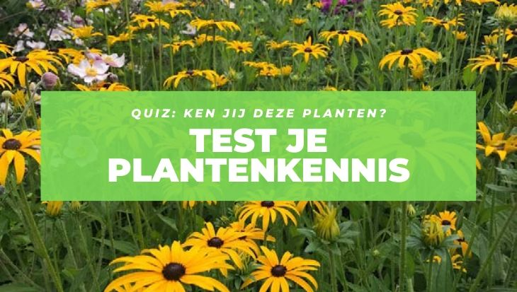 Tuinseizoen_planten_quiz_2019_v2