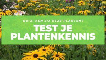 Plantenquiz - Hoe heten deze planten?