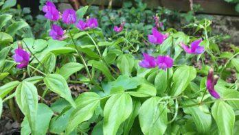 Hoe heet deze plant? Tuinseizoen januari-februari 2020