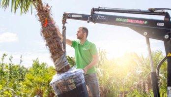 Op zoek naar bomen voor je tuin? Laat ze gratis thuisbezorgen