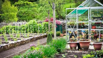 Quiz: test jouw (moes)tuinkennis