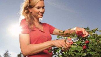 Grasmaaien, snoeien en tuinaanleg zijn favoriete tuinklussen
