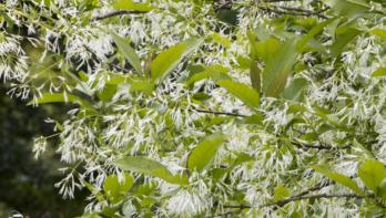 Hoe heet deze plant? Tuinseizoen juni 2020