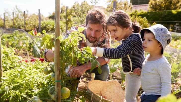 Tips voor een klimaatneutrale tuin