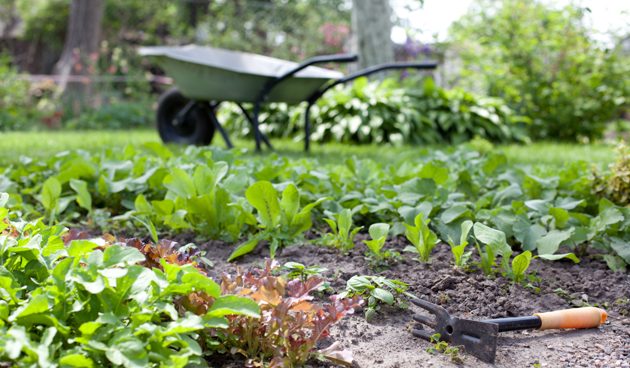 Subsidies voor het vergroenen van je dak of tuin
