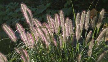 Siergrassen Plant & Grow