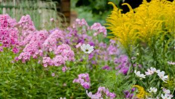 Wanneer je een vasteplantenborder goed inricht, bloeit hij het hele jaar.