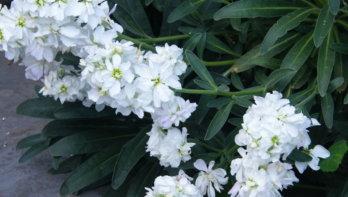 Hoe heet deze plant? Tuinseizoen september